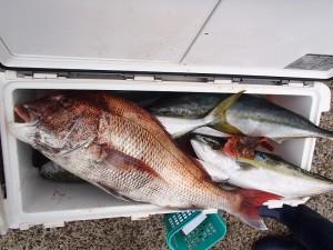 魚神 (3)